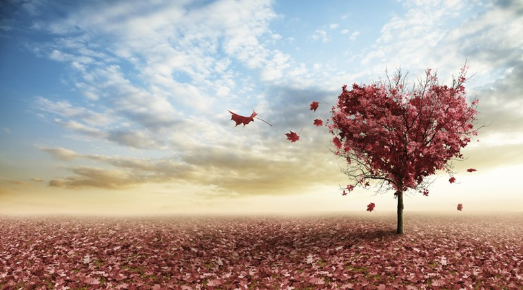 love-autumn-tree_759_thinkstockphotos-177812216.jpg